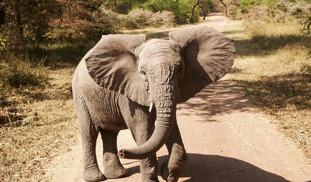 Kenia, Tanzania 2003